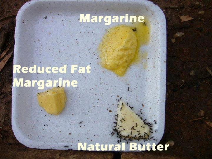 ants-vs-margarine-vs-butter-