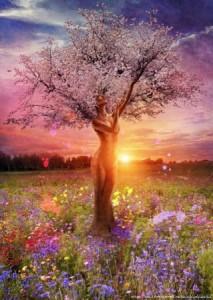 zena strom