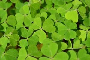 stvorlistky-zelene