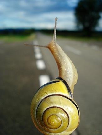 slimak na ceste