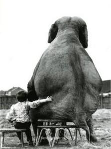 chlapec a slon
