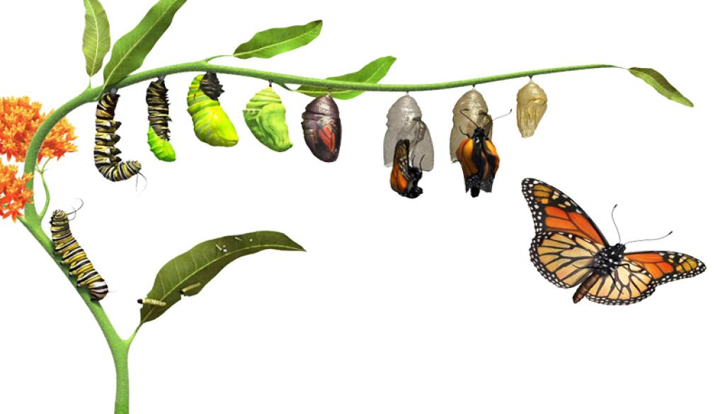 Poučný príbeh: Motýľ